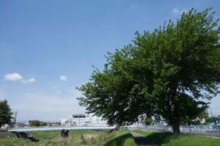 鶴見川サイクリングロード(中山・千代橋付近)