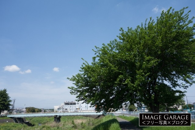 鶴見川サイクリングコース(中山・千代橋付近)の無料写真
