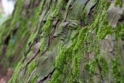 木についた苔