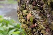 木に生えている苔と葉