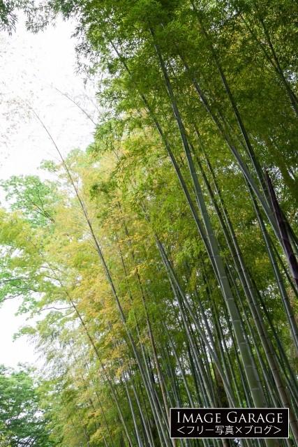 修善寺の竹林のフリー素材写真(無料)