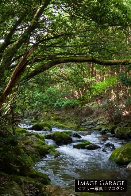 渓流・地蔵堂川の無料写真