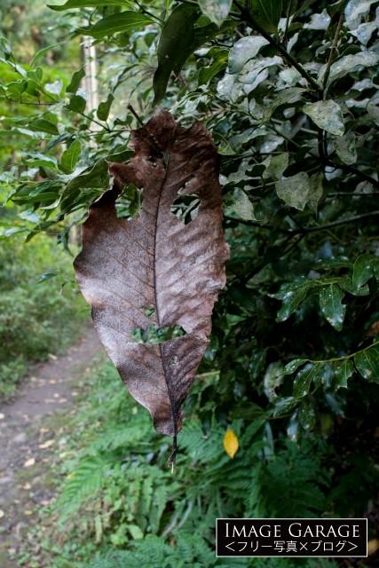 トレイルにあった顔のような葉っぱのフリー写真素材(無料)