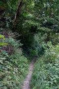 森の中の小道・森戸林道のトレイル
