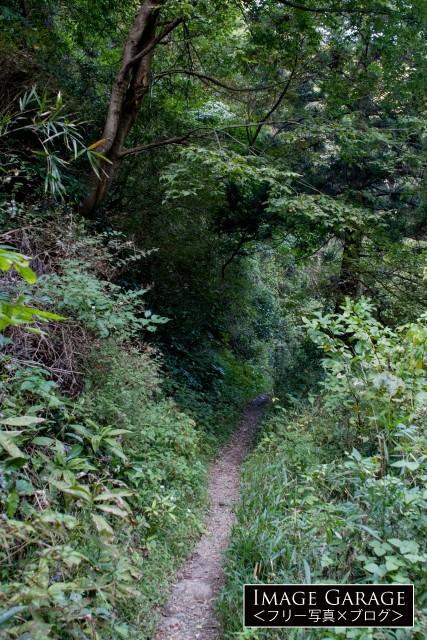 森戸林道のトレイルの無料写真