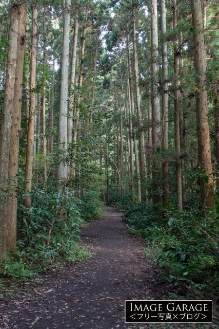 三浦半島の森戸林道トレイルの無料写真