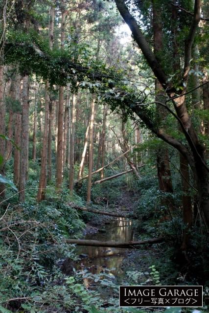 三浦アルプスで見た川の風景の無料写真
