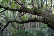 森の中の苔の生えた木