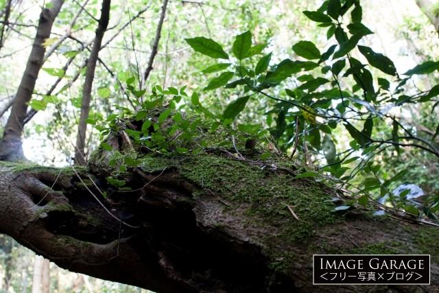 木に生えた苔の無料写真