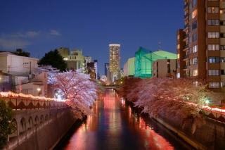 目黒新橋から見た目黒川の桜