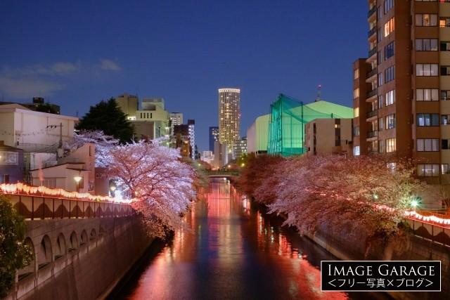 目黒新橋から見た目黒川の桜の無料写真