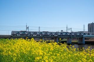鶴見川の菜の花と東急5000系電車