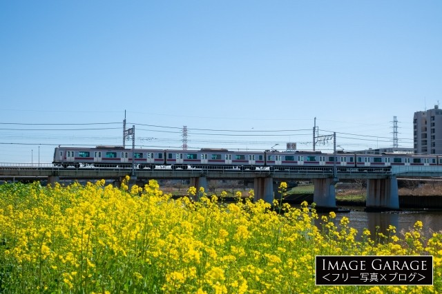 鶴見川の菜の花と東急5000系電車のフリー写真素材(無料)