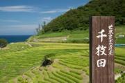 世界農業遺産の白米千枚田と看板
