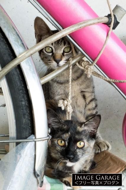 自転車の間から顔をのぞかせる子猫のフリー画像(無料写真素材)
