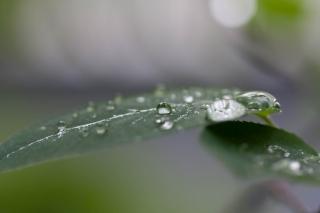 雨上がりの葉っぱの滴