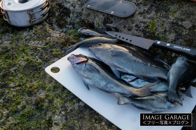 釣った魚(メジナ)をキャンプで調理のフリー写真素材