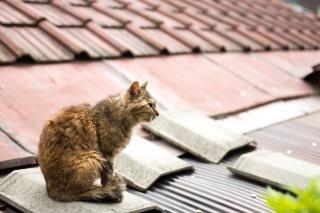 屋根の上にいる尾道の猫
