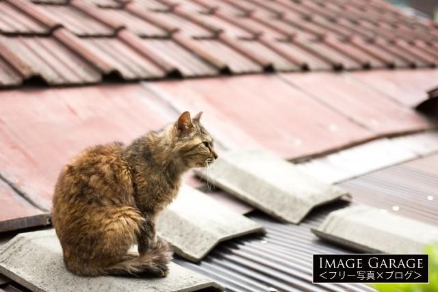 屋根の上にいる尾道の猫のフリー写真素材