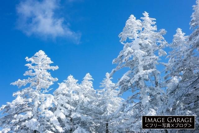 青空と雪の積もった木のフリー写真素材