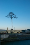陸前高田・奇跡の一本松(縦位置)