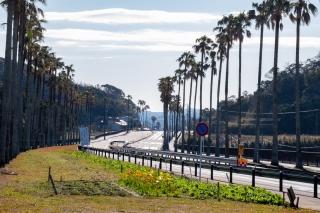 千葉県館山市・国道127号線の椰子並木ロード