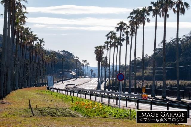 千葉県館山市・国道127号線の椰子並木ロードのフリー素材写真(無料)