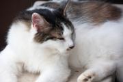 室外機の上でくつろぐ雑種の猫