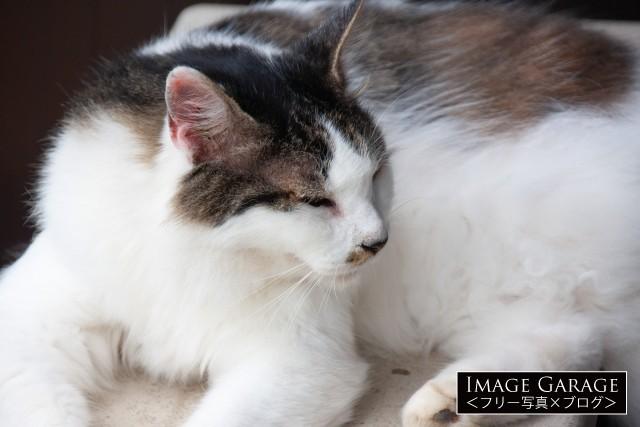 室外機の上でくつろぐ雑種の猫のフリー素材写真(無料)