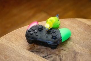 プロコン(ゲームコントローラー)で遊ぶ黄緑色のセキセイインコ