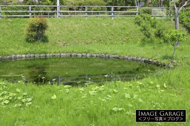 鶴見川源流の泉のフリー素材写真(無料)