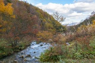 チャツボミゴケ公園・渓流の紅葉風景