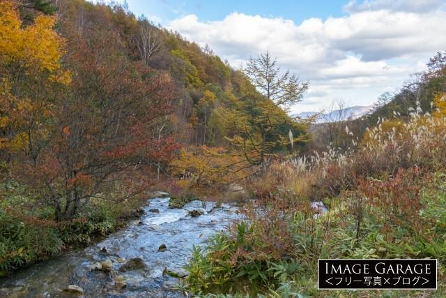 チャツボミゴケ公園・渓流の紅葉風景のフリー素材写真(無料)