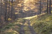 カラマツ林の中に続く砂利道・白石林道