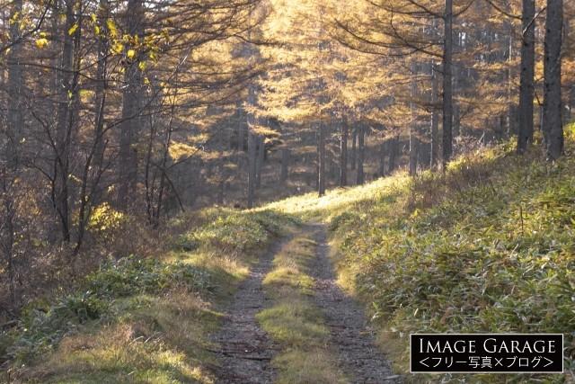 カラマツ林の中に続く砂利道・白石林道のフリー素材写真(無料)