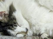 座布団の上で眠る猫