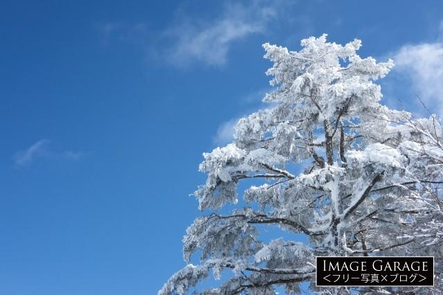 白くなった木・樹氷のフリー写真素材(無料)