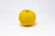 世界一の生産量と消費量の柚子
