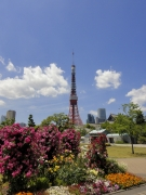のどかな5月の東京タワー