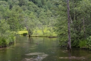 上高地・田代池と湿原