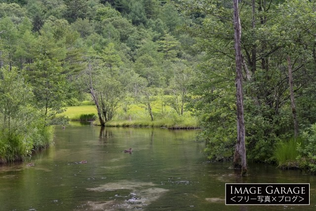 上高地・田代池のフリー写真素材(無料)
