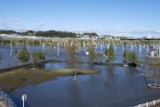 水の入った新横浜公園の多目的遊水池