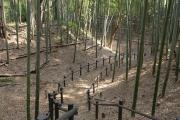 小机城趾の竹林