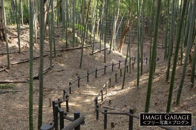 小机城趾の竹林のフリー画像(無料写真素材)