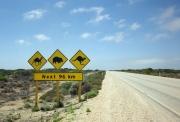 ナラボー平原の野生動物注意の看板