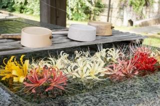 西方寺の彼岸花の花手水