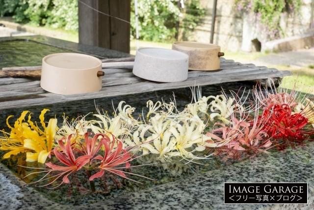 西方寺の彼岸花の花手水のフリー画像(無料写真素材)