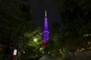 増上寺北側の路地から9月秋草色の東京タワー