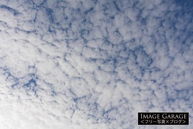 青空を覆うひつじ雲のフリー写真素材(無料)