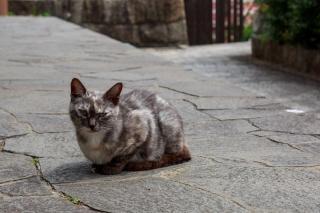 こちらを見つめる尾道の猫
